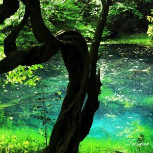 エメラルドグリーンの丸池様