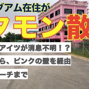 グマモン失踪!?失踪現場からピンクの壁経由でフジタビーチまでタモン散歩。