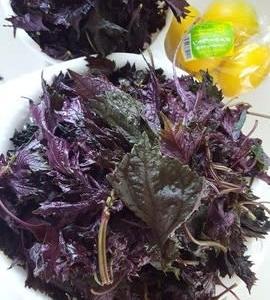 今年の梅紫蘇ジュース