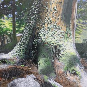 苔むす木 油彩 30号 描画中