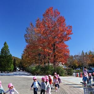 秋晴は 公園へ