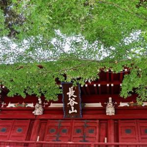 青紅葉と 仁王門