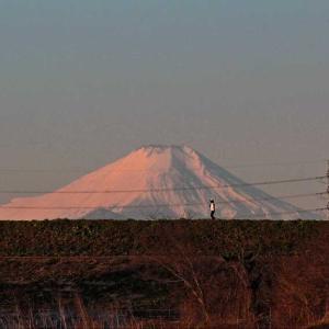 土手の上 白富士