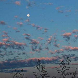 十六夜の 白い残月