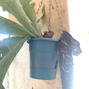 植木鉢をハンギングにリメイク