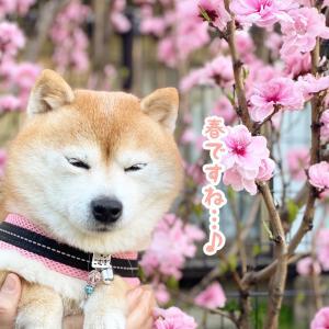 **春を探してロング散歩♪**