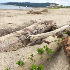 瀬波海岸。