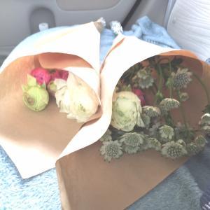本日のお花。