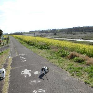 河川敷散歩
