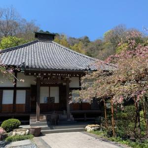 鎌倉・4月の花