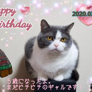 今日はカルマンのお誕生日!