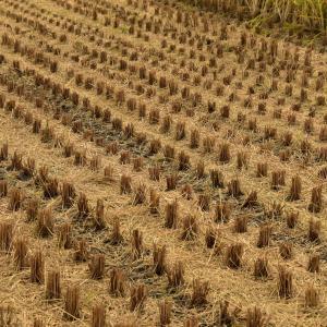 秋の香り、枯れた草と土