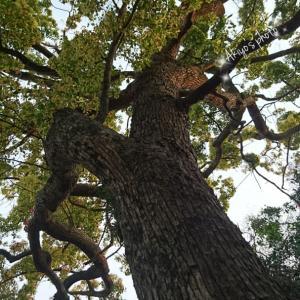 楠と皐月と楡の木と