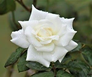 李登輝元総統に哀悼の念