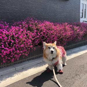 楽しい〜っ 街中散歩♪