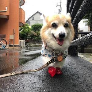 新しいレインコート❤︎梅雨を楽しもう♪