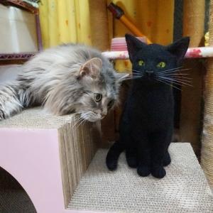 記憶の中の残る黒猫