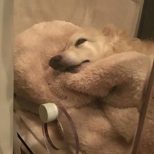 愛犬Laura 入院と…