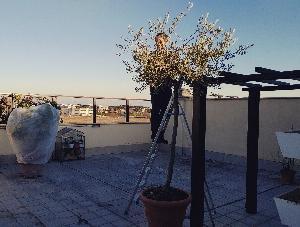 最近のローマは暖かく良い天気♥PGはテラスメンテナンス(*^^*)寒いとサボリ気味の私(笑)