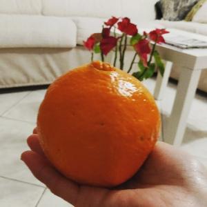 今年もシチリアからでっかいオレンジ取り寄せ~PGが大好きなの♪イタリアのフルーツやお野菜が新