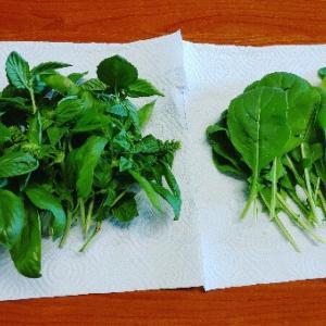 自家栽培の日々♪毎日自分たちで育てる野菜が食べれるって幸せ~♥この時期のバジルはすごい量なので