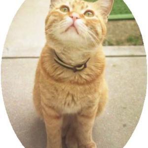 ★『招き猫カワヒラくんが教えてくれた幸運の流れに乗る生き方』・・・阿部敏郎(著)