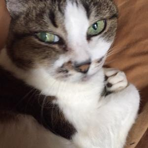 湧き出す猫への愛情