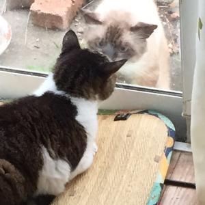 のら猫ちゃんが来た!