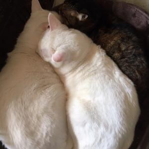 猫団子の季節