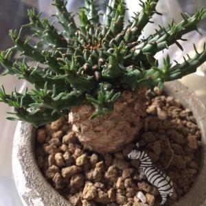 珍しい姿の植物