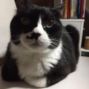 結膜炎の猫のぷーちゃん
