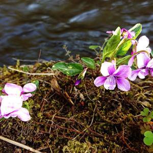すみれ咲く春の日に