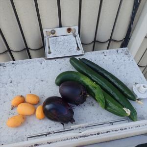 今年初の収穫