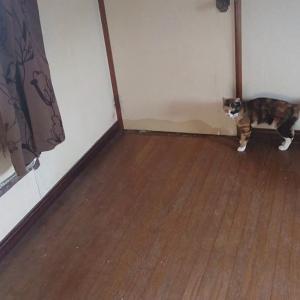 廊下で遊びたい