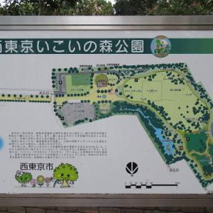 お久し振り、西東京いこいの森公園