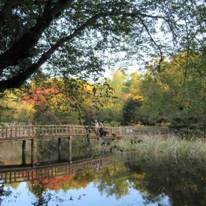 石神井公園・2020秋
