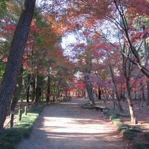 平林寺の紅葉・2020 (2)