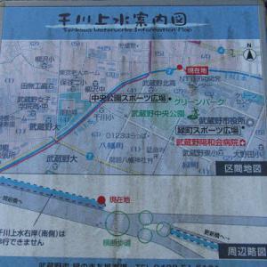 千川上水・2020冬