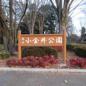 小金井公園・2020冬