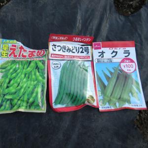 夏野菜の種蒔き