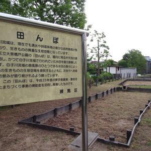 まだ田植えしていなかった田んぼのある公園。。。。。
