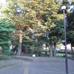 早朝散歩7/18