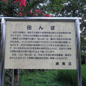 田んぼのある公園~大泉橋戸公園 2021夏