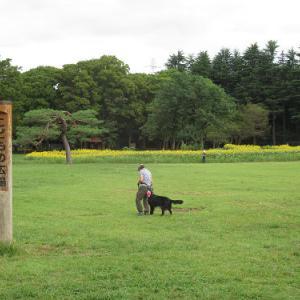 ポタリング~小金井公園のひまわり・2021