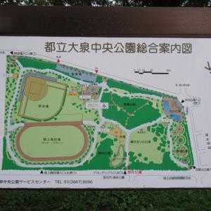 大泉中央公園のトキワサンザシ