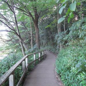 石神井公園の周りの寺社仏閣~石神井氷川神社