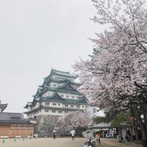 オンライン公演の視聴方法について〜桜の画像付き〜