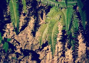 浜北森林公園 11