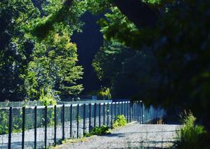 浜北森林公園 21