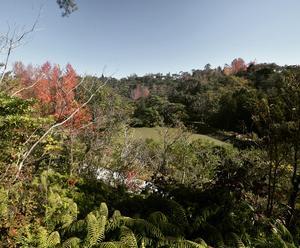 2019 浜北森林公園の秋  11